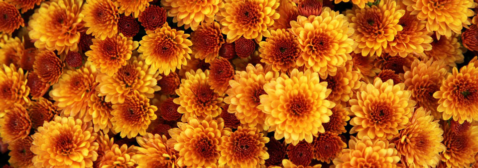 Seasonal Autumn Flowers Our Favourites Flower Delivery Bloom Magic