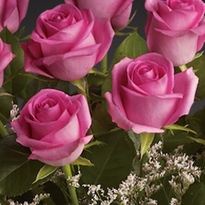 Bloom Magic - Flower Delivery Ireland - What's more special than receiving the classic gift of one dozen luxurious pink roses? Long stemmed Grade A pink roses, expertly hand-tied and giftwrapped to make sure that someone special feels amazing. These roman