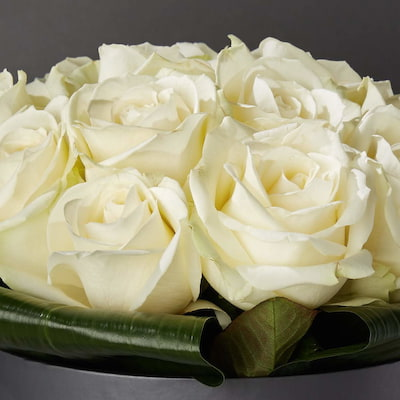 Bloom Magic - Flower Delivery Ireland - A stunning flower arrangement of top quality white roses, that come in either a charcoal grey, or powder blue hat box. These romantic flowers were inspired by the white night in Paris, and that makes them the perfec