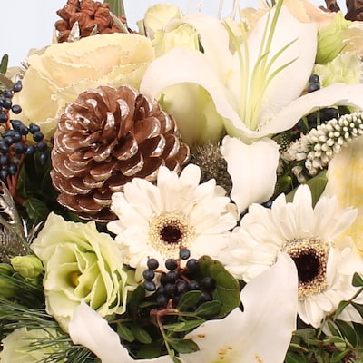 Bloom Magic - Jack Frost Gift Set