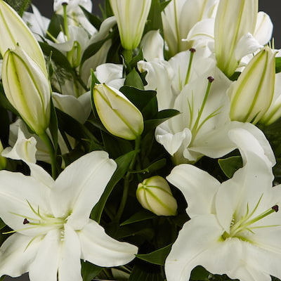 Bloom Magic - Flower Delivery Ireland - An elegant and timeless classic. Scented oriental lilies complimented by lush green foliage. By special request, you can choose from either pink or white lillies. This flower arrangement is designed by the countries