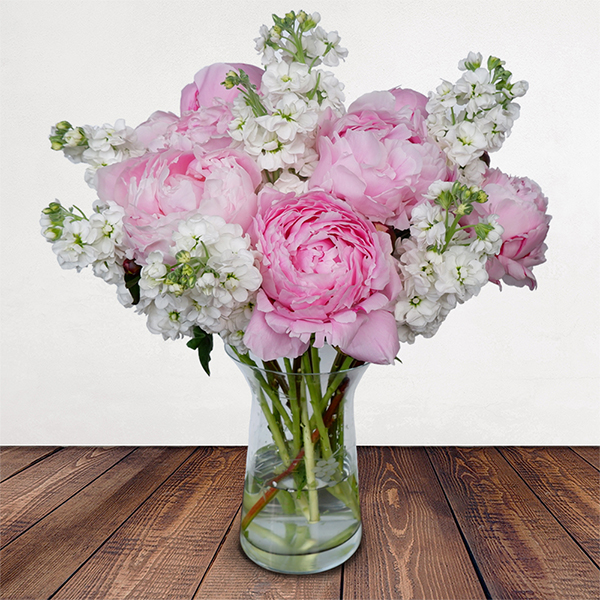 Scented Summer Flowers Delivered - **Please note the colour of the Irish Stocks may vary!   Scented Summer is a gorgeous combination of fragrant Irish stocks and pretty pink peonies. These flowers make for an extra special gift but unfortunately the peony season doesn't hang around for too long.  A limited edition Bloom Magic bouquet, reserve yours today before it's too late.   Premium size consists of 6 x peonies, 6 x fragrant Irish Stocks Deluxe size consists of 8 x peonies, 8 x fragrant Irish Stocks.   Please note these peony flowers will arrive fresh in bud, and are expected to bloom within 4 days.  Vase is not included.