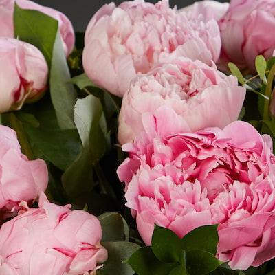 Bloom Magic - Pure Peonies